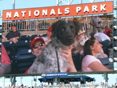 Washington Nationals Pups in the Park