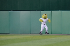 Chicago White Sox Mascot Southpaw at Nationals Park