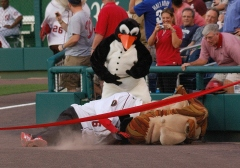 Rally Penguin takes down Abe Lincoln - Nationals Presidents Race