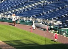 Nationals Park Marriage Proposal Presidents Race