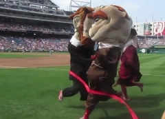 Teddy Roosevent nearly wins the presidents race at Nationals Park