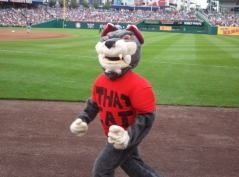 That Cat interferes with the presidents race at Nationals Park