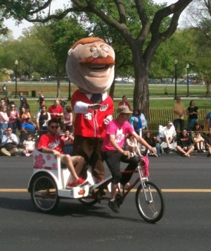Teddy in Cherry Blossom Parade photo by Sarah Guthrie