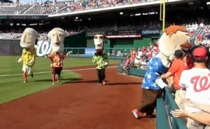 Washington Nationals Presidents Race Teddy Distracted by popsicles