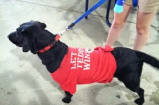 """Pups in the Park say """"Let Teddy Win"""""""