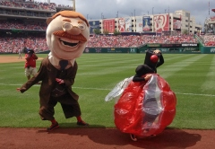 Cicada invades Nationals presidents race