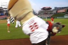 Washington Nationals presidents race That Cat tackles Teddy Roosevelt