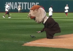 Teddy Roosevelt pets a pigeon at Nationals Park