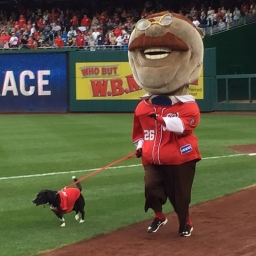 Rugby, raccoons, and puppies can't keep Abe Lincoln from claiming a record fifth presidents race season title