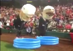 Nationals racing presidents Olympic Synchronized Diving