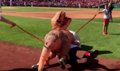 t-rex-chases-teddy-roosevelt-nationals-presidents-race